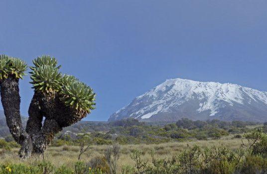 Kilimanjaro. Una increíble aventura